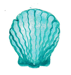 Meeresmuschel Seawhisper Cornwall in Mawgan Porth
